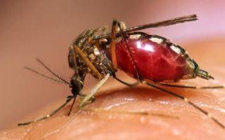 Лихорадка западного нила: симптомы и лечение