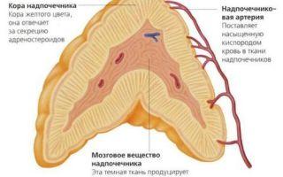 Гиперплазия надпочечников — симптомы, диагностика и лечение
