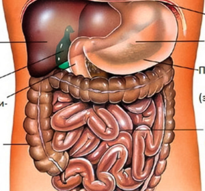 Как подготовиться к УЗИ органов брюшной полости
