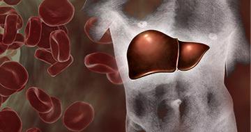 3 сценария аутоиммуного гепатита. Можно ли помочь печени, если ее атакует иммунитет?