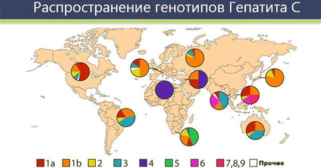 Виды генотипов вируса гепатита С