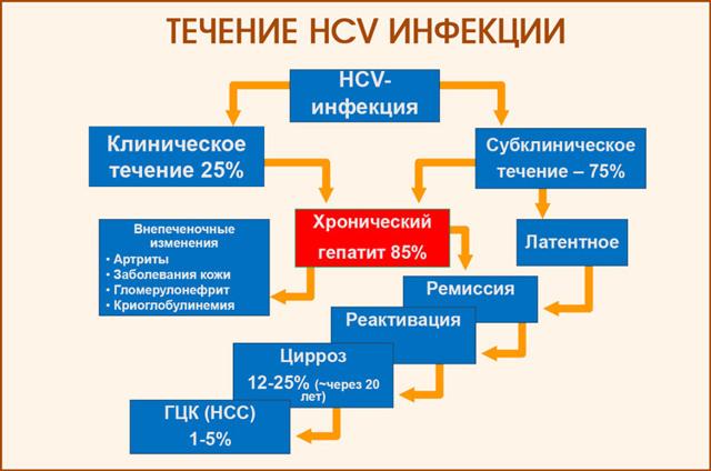 Лечение гепатита C народными средствами в домашних условиях