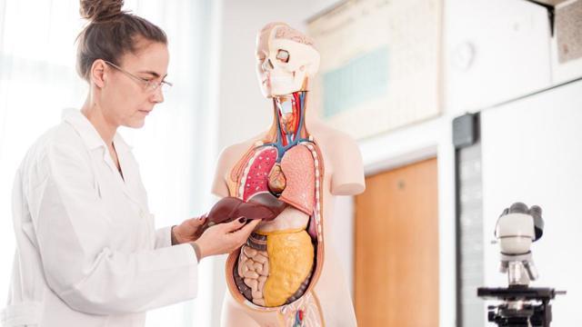 Что делать, если при беременности обнаружен гепатоз печени
