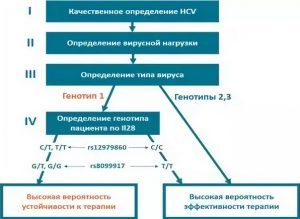 Как определяют гепатит С по РНК вируса количественно и качественно