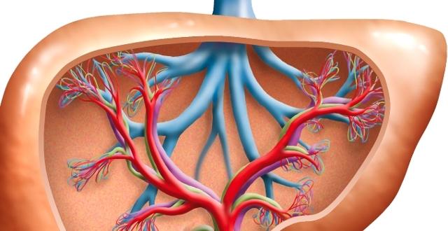 Почему возникает стеатогепатоз и как его лечить