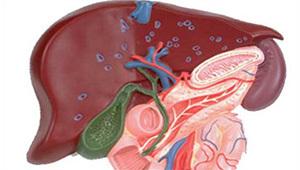 Как лечить желчный пузырь при помощи аптечных препаратов