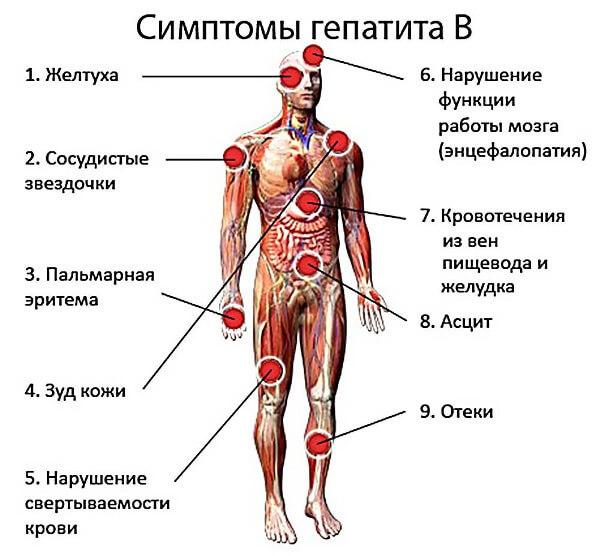 Чем гепатит B отличается от гепатита C и как их лечат