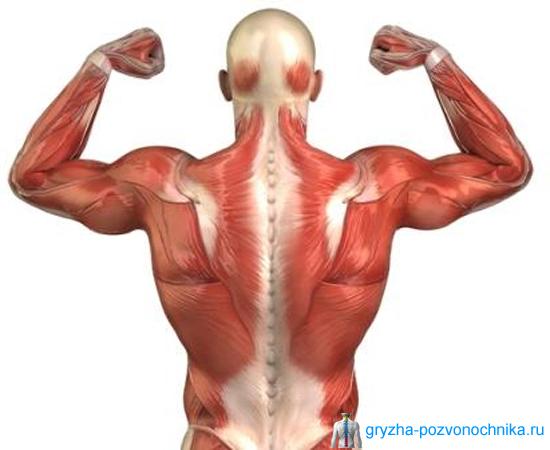Мышечная грыжа: причины, как проявляется, чем лечится