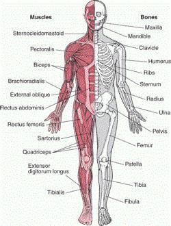 Лечение болезней опорно-двигательного аппарата (ОДА)