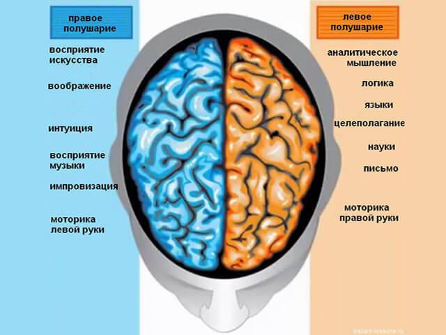 Курение делает мозг человека меньше