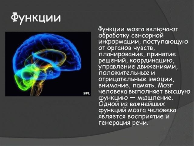 Витамины Витрум Мемори: отзывы, инструкция по применению, цена, состав
