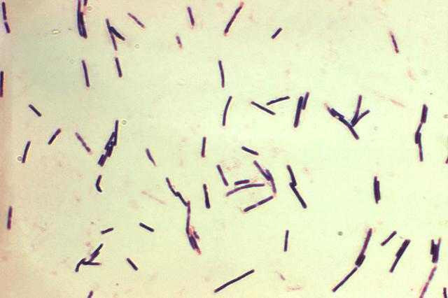 Клостридии в кале у ребенка и взрослого, лечение клостридиоза