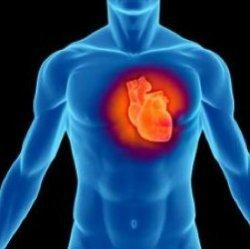Искусственное сердце не имеет сердцебиения