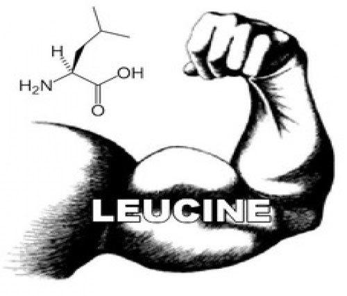 Лейцин: инструкция по применению, отзывы и цена