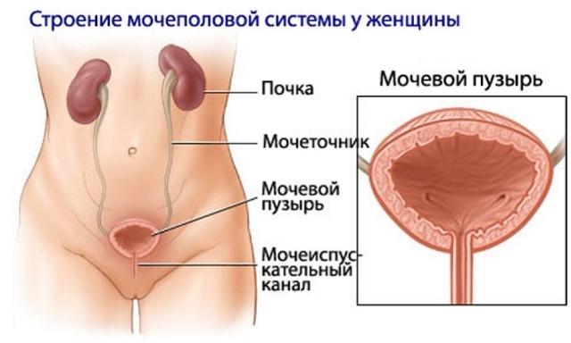 Боли при мочеиспускании после родов: лечение и профилактика
