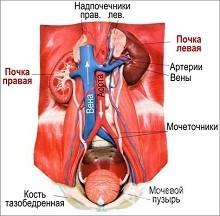 Что такое гиперурикемия: диагностика, лечебная диета, профилактика