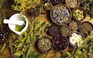 Мочегонные травы: способы применения и противопоказания