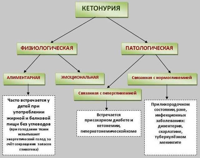 Кетонурия: причины, симптомы, способы выявления, лечение