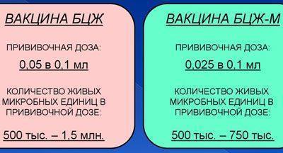 БЦЖ М: инструкция по применению и отличие от БЦЖ