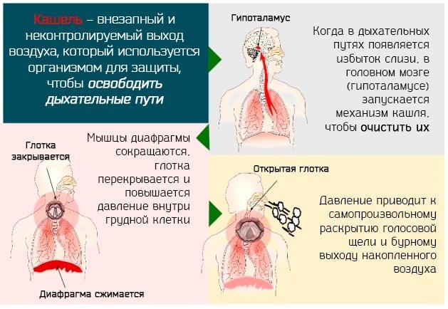 Сироп и порошок от кашля Флуифорт: при каком кашле принимать