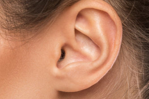 Особенности строения уха человека