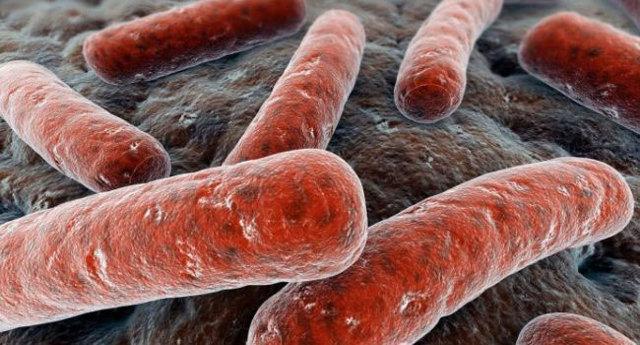 Туберкулез почек и мочевыводящих путей: симптомы и диагностика
