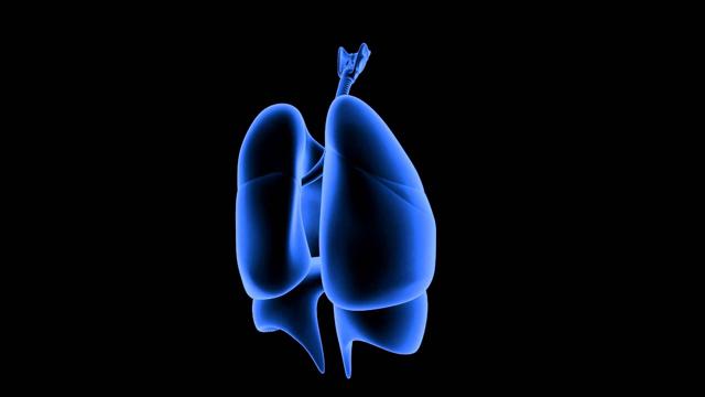 Туберкулез бронхов: первые признаки, симптомы и лечение
