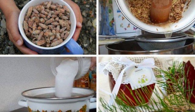 Сосновые почки от кашля: рецепт как приготовить отвар