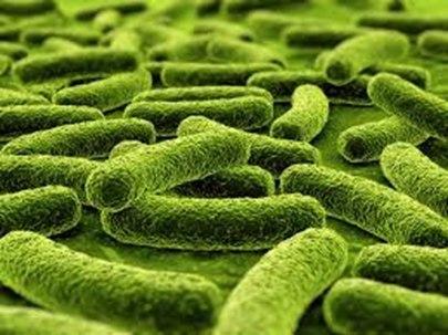Профилактика туберкулеза у детей и подростков - рекомендации