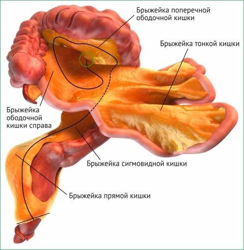 Туберкулез кишечника: симптомы, лечение, как передается