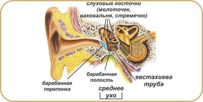 Основные симптомы и лечение отита среднего уха