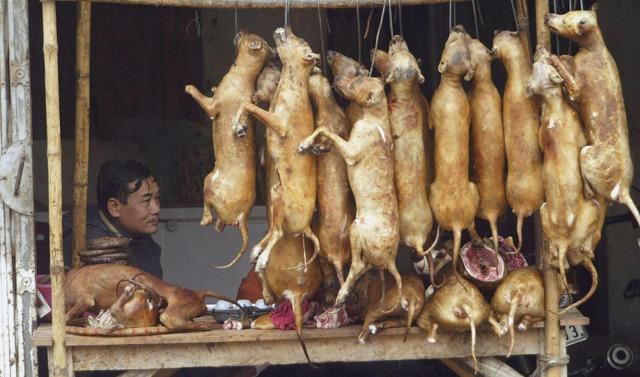 Собачье мясо от туберкулеза - помогает или нет